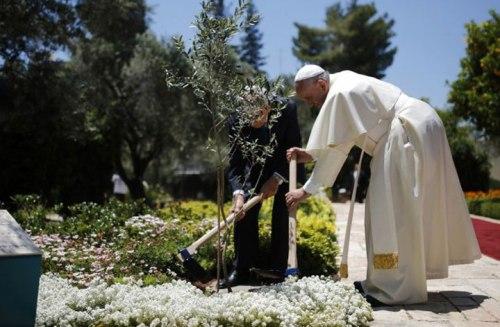 plantando-un-olivo-con-simon-perech